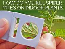 How Do You Kill Spider Mites On Indoor Plants