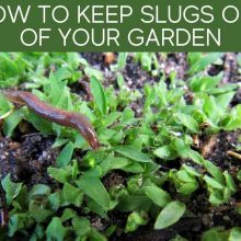 How To Keep Slugs Out Of Your Garden