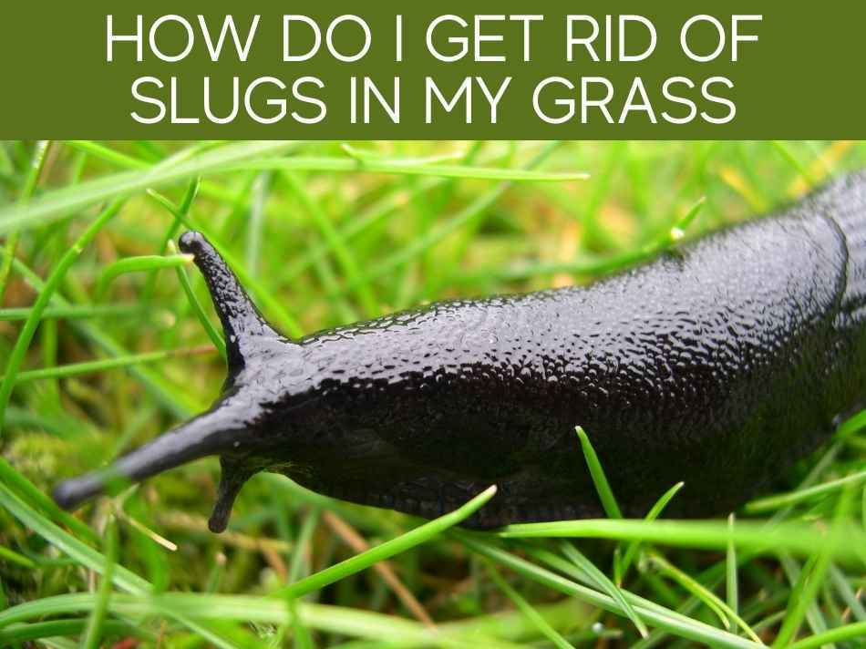 How Do I Get Rid Of Slugs In My Grass