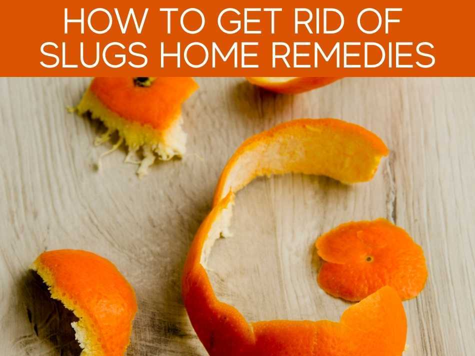 How To Get Rid Of Slugs Home Remedies