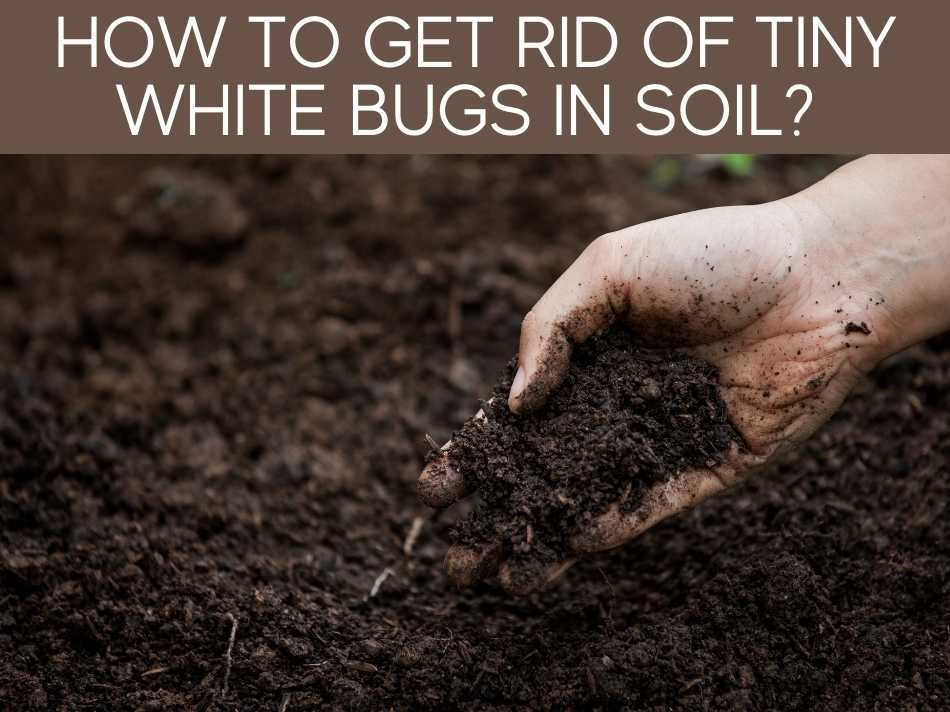 How To Get Rid Of Tiny White Bugs In Soil?