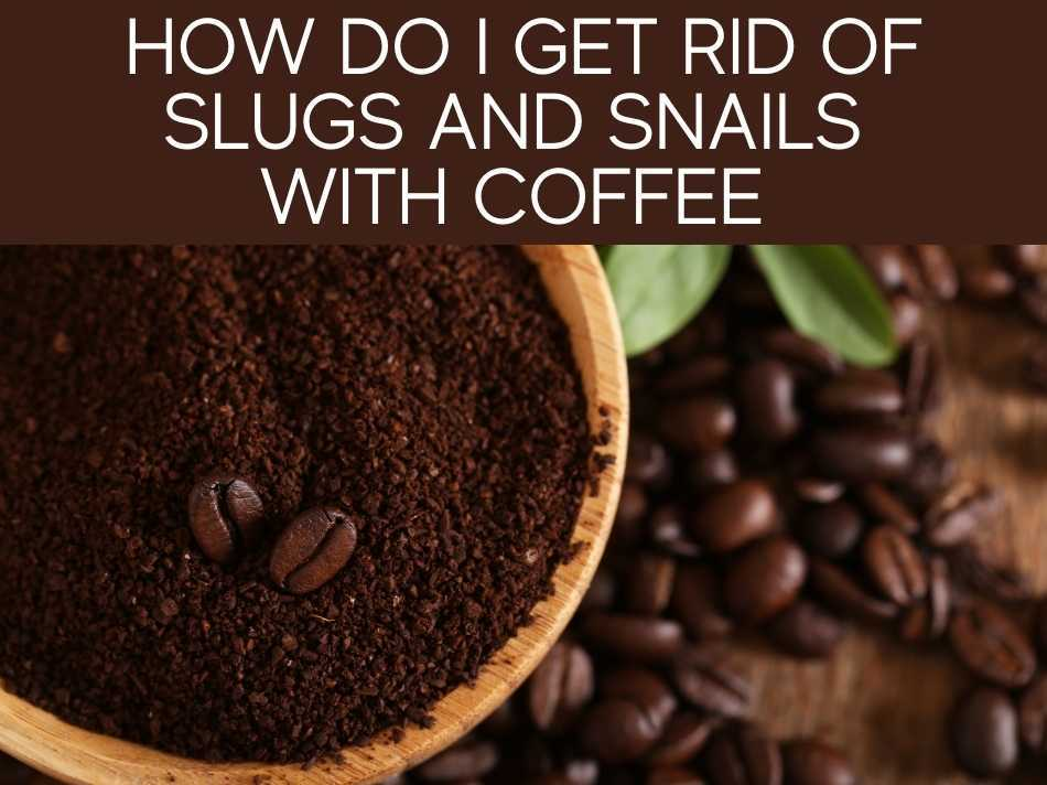 How Do I Get Rid Of Slugs And Snails With Coffee