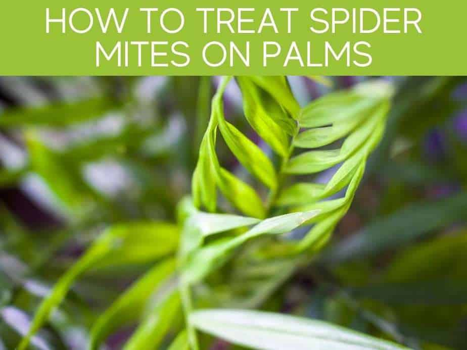 How To Treat Spider Mites On Palms